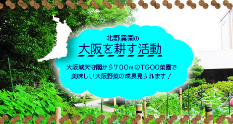 TGOO様菜園管理活動について