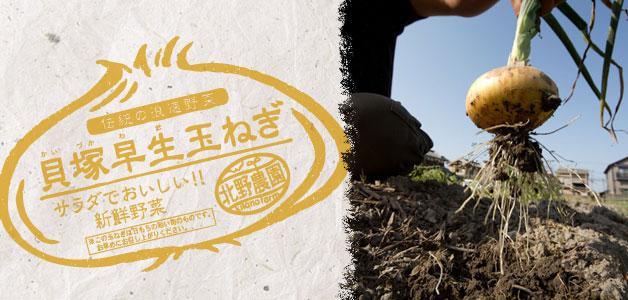 早生玉葱(わせたまねぎ)